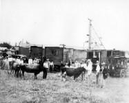 Rice Dorman Show. Men showing cattle, and ferris wheel in background. Henryetta, Oklahoma